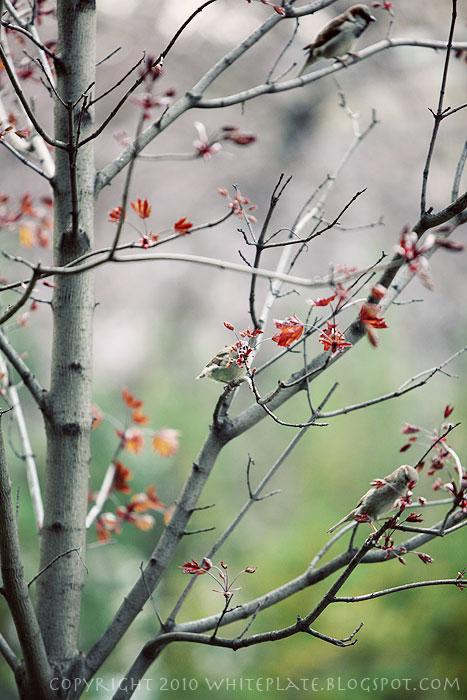 rp_spring_0153.jpg